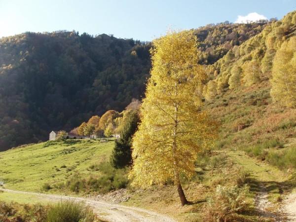 Ecomuseo Val Sanagra - L'alpe Erba