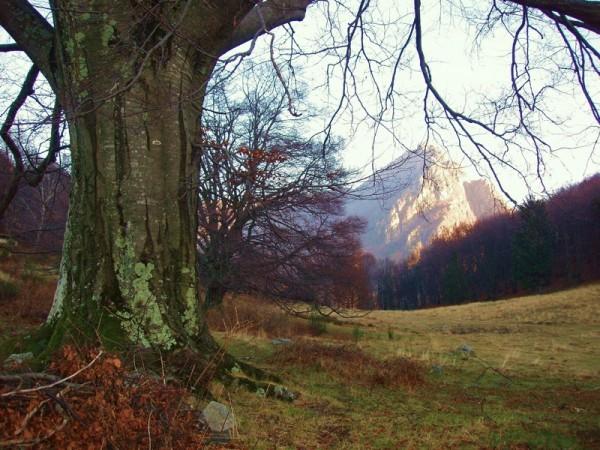 Ecomuseo Val Sanagra - Alpe Logone 01