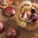Chestnut with Bur